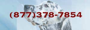 All Pet Care Animal Hospital