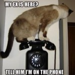 "siamese cat stands on black old-time telephone on the wall and makes snarky comment ""My ex is here? Tell him I'm on the phone."""