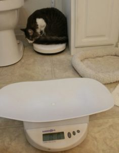 This cat spurned the baby scale I calibrated for her...and sat on the people scale next to the toilet instead! Cat humor!