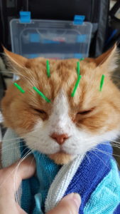 Acupuncture applied to the scalp and face can be effective to help brain and eye disease